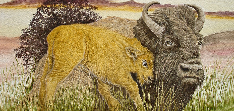 Bison and calf.jpg