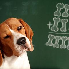 beagleschool.jpg