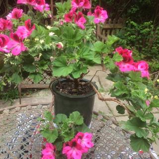 U3A Garden Group