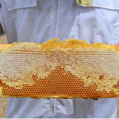 Home Grown Honey