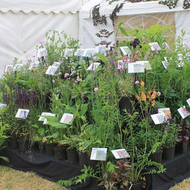 Beechbridge Plants.jpg