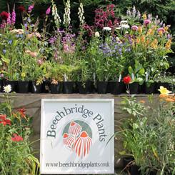 Beechbridge Plants