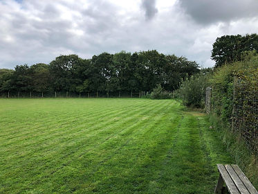Secure dog paddock with wooden benches to sit on, surrounded by high fencing and tall trees