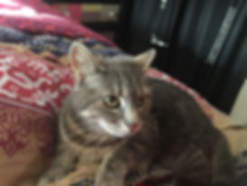 silver tabby cat on a bed