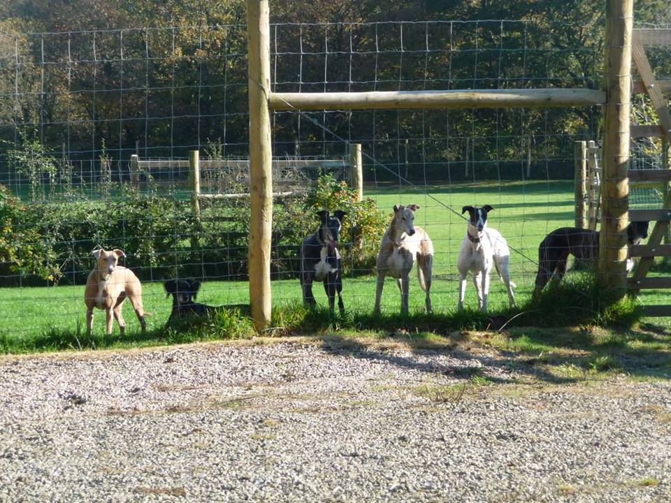 Sighthounds in secure field