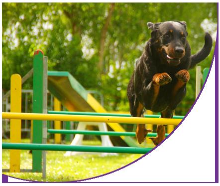 Оборудование для собачьих площадок