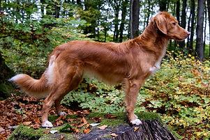 Ginger-steh.jpg