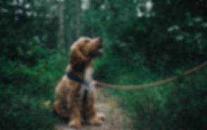adorable-animal-canine-1254140-1080x675.