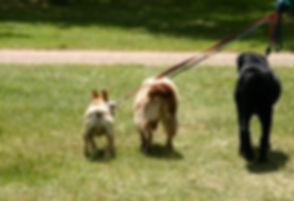 dogwalk1.jpg