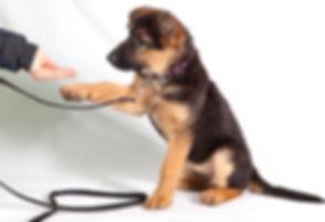 dog_training_tips.jpg