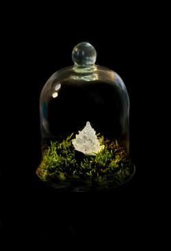 fractal sous cloche - marie flambard