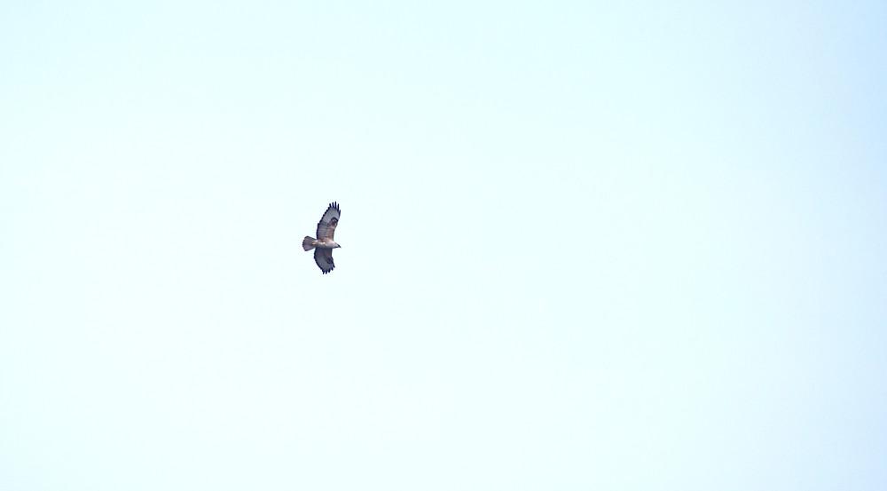 Bird flying blue sky | Freedom from Anxiety | www.KirstyMacdonald.co.uk