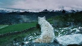 Histories of Wolves_Still 01.jpg