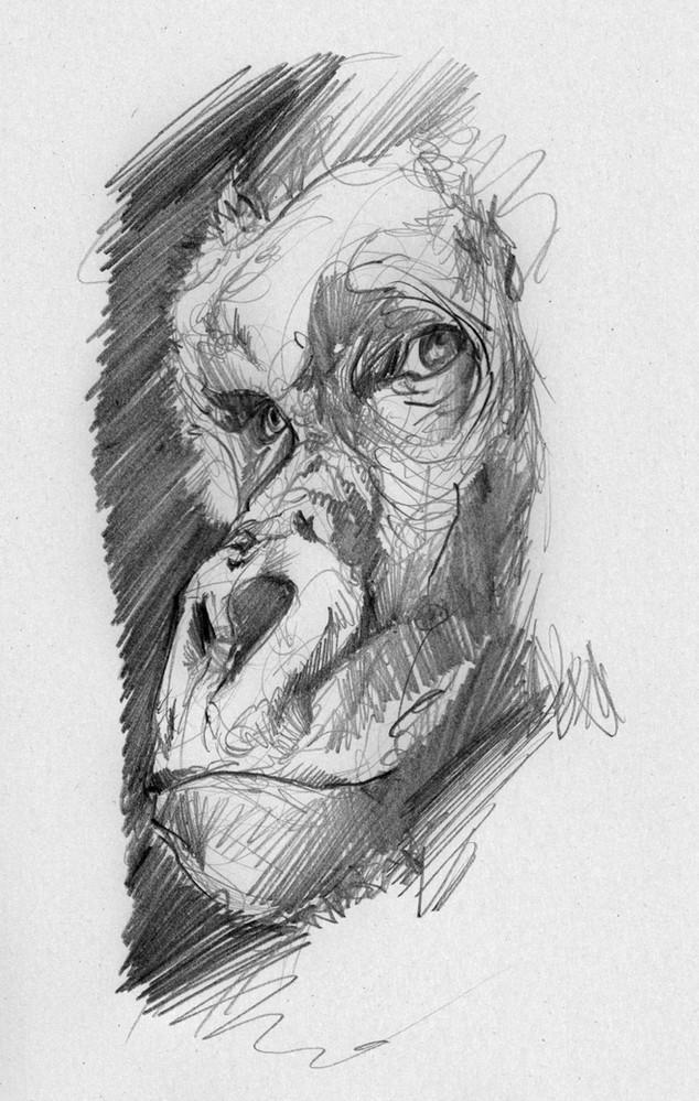 sirblondin_Sebastien Tonin_Gorilla.jpg