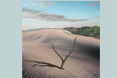 Sandhills and Solitude