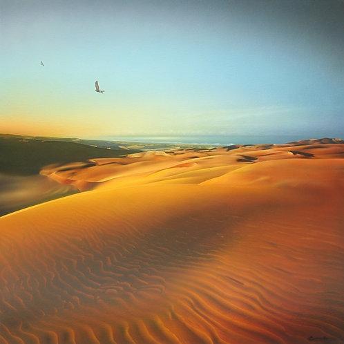 Harrier Hawks over Te Paki Sand Dunes