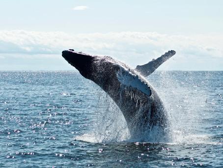 Whales in Costa Rica