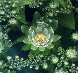 Blossoming Lotus: Poem For The New Year