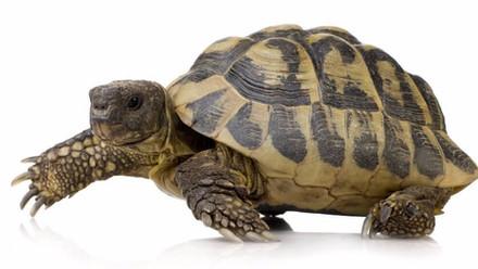 Rather The Tortoise