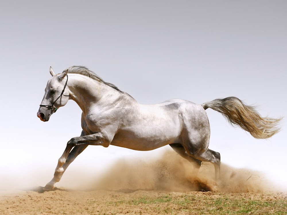 horse-1024x768.jpg