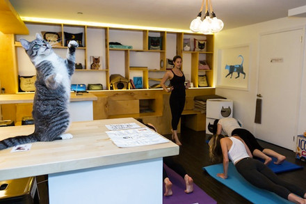 Mindfulness And Meows: Cat Yoga With Amy Apgar