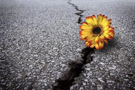 My Mantra When Facing Adversity