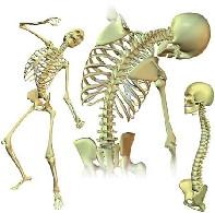 skeletonav_0.jpg