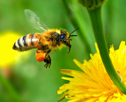 The Guest Blog: Are You a Worker Bee?