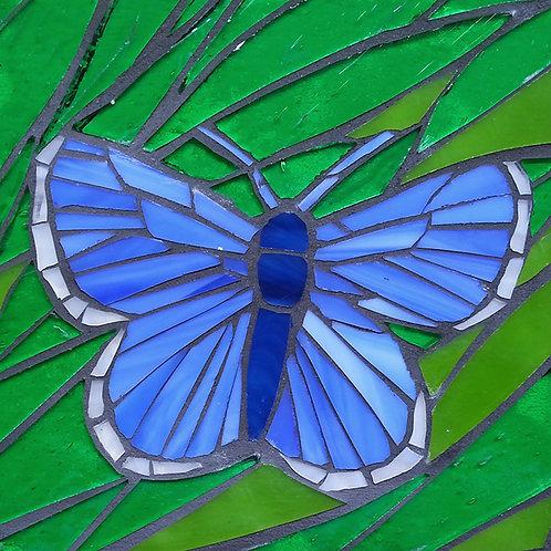 Endangered butterfly: Lotis Blue