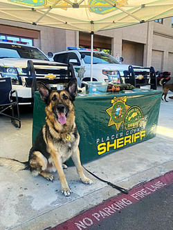 K9 at Day with a Deputy 2019