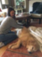 Dog Massage