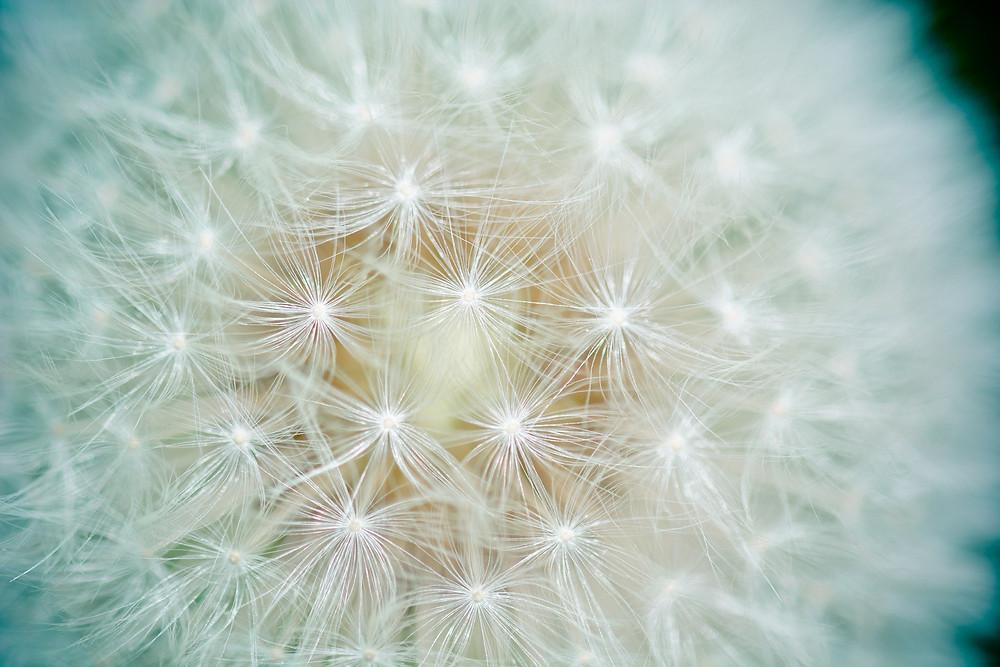Macrofotografia fiore pianta grassa retroilluminato