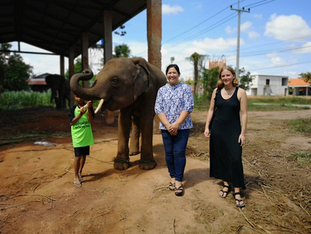 Emily's Journey- Living and Teaching in Surin (Elephant Town), Thailand