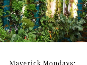 MAVERICK MONDAYS: FARM CITIES