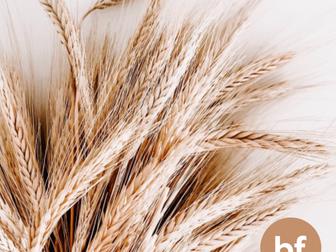 Boa Forma - Mitos e Verdades Sobre O Trigo