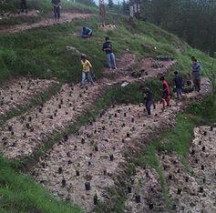Plantation-(2).jpg
