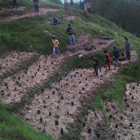 Plantation in progress-I