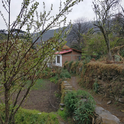 The homestay cottage