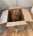 Cat in box2.jpg