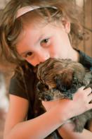 Poovanese Puppy