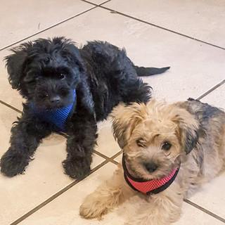 Fitz & Georgie