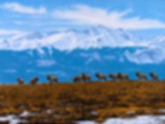 Wyoming Artist, Landscape, Cody Wyoming