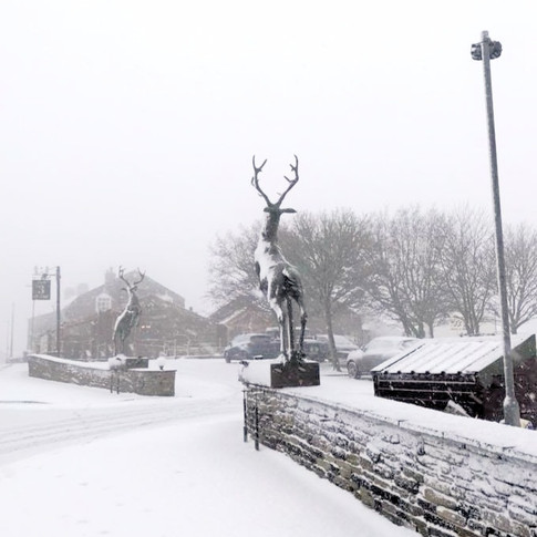 Stunning bronze stags in Christmas snowfall