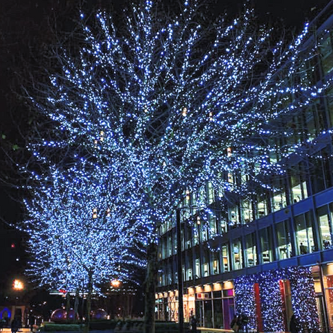 Real trees wrapped with twinkling LED lights, Simply stunning