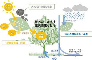樹木のもたらす環境価値とは?.jpg