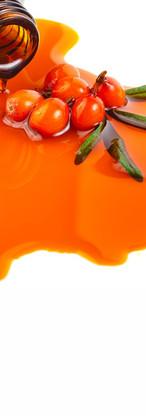 Sea buckthorn  |  Hippophae Rhamnoides