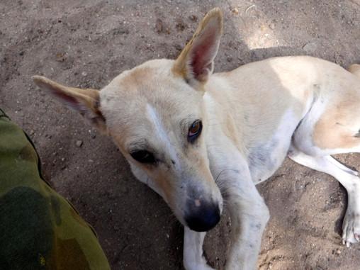 Volunteering at Animal Aid In Udaipur, India