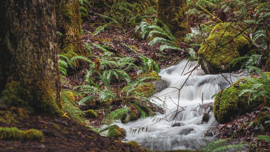 Rainforest - Canada
