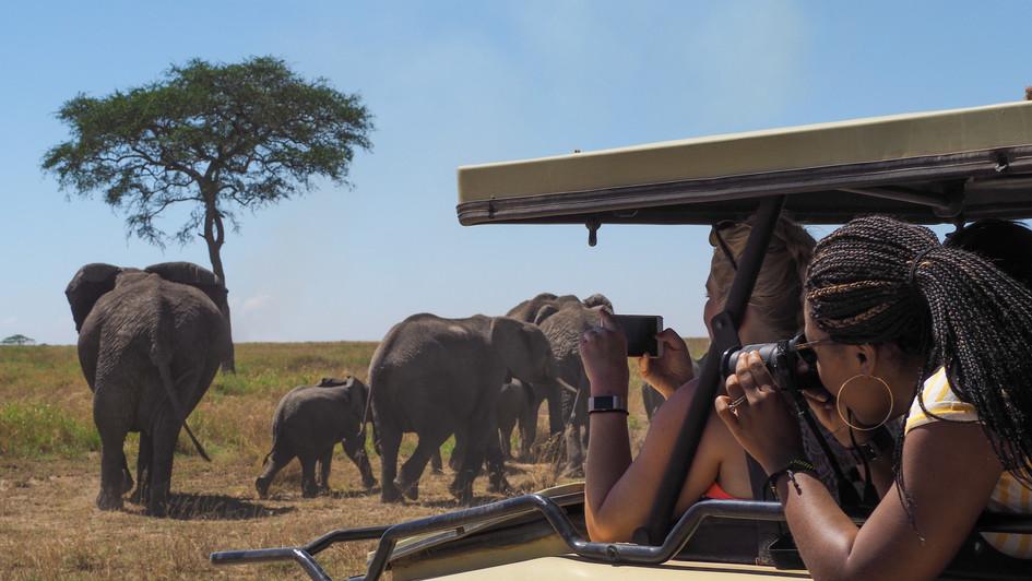 Safari - Tanzania