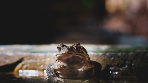A frog appears after the rain